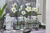 Kleine Glasflaschen mit Narcissus 'Ziva' (Tazetten - Narzissen)und Helleborus