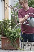 Junger Mann pflanzt Efeu an Drahtgestell Elch
