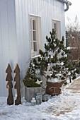 Koniferen auf der Terrasse weihnachtlich dekoriert