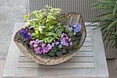 Getoepferte Schale mit Mini-Pflanzen
