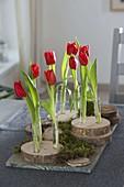 Einzelne Stiele von Tulipa (Tulpen) in Glasröhrchen