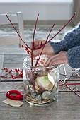 Amaryllis in Glas mit Kieselsteinen gezogen
