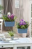 Holzkaesten mit Fruehlingsbluehern bepflanzt als Raumteiler aufgehängt