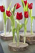 Ungewöhnliche Dekoration : Tulipa (Tulpen) in Reagenzglaesern