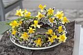 Kranz aus Salix (Palmkätzchen, Weidenkätzchen) mit Narcissus