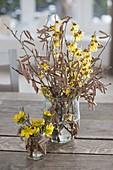 Straeusse aus Zweigen von Corylus avellana (Haselnuss), Hamamelis