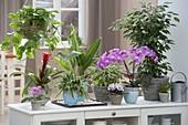 Sideboard als Raumteiler mit Zimmerpflanzen