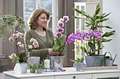 Sideboard als Raumteiler mit Orchideen