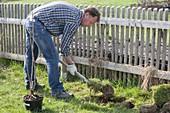 Mann pflanzt rote Johannisbeere im Biogarten
