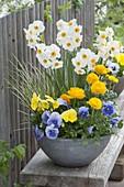 Schale mit Narcissus 'Geranium' (Narzisse), Viola wittrockiana