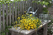 0 - Euro Straeusse von der Wiese : frisch gepflueckte Ranunculus acris (Butterb