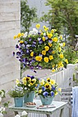Fruehlingsterrasse mit bunt gemischten Viola wittrockiana (Stiefmütterchen)