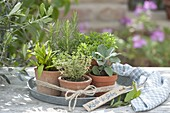 Herbs of the south on zinc tray, sage, rosemary