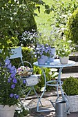 Kleine Terrasse mit blauem Tisch und Stuhl, Viola cornuta 'Blue' (Hornveilchen