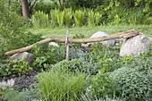 Langer wettergegerbter Ast eines Holunders als Gartenskulptur