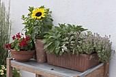 Kasten bepflanzt mit Kräutern