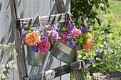Zink-Gefaesse mit verschiedenen Rosa (Rosen) und Geranium