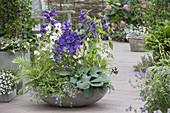 Schale mit verschiedenen Glockenblumen : Campula glomeata 'Alba'
