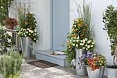 Bepflanzte hohe Zink - Gefässe am Hauseingang