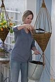 Kapuzinerkresse in selbstgemachte Weiden-Ampel pflanzen