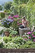 Halbschatten-Terrasse mit Hortensien und Brunnen
