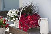 Weisses Körbchen mit Petunia Perfectunia 'White', Petunia Upright 'Red'