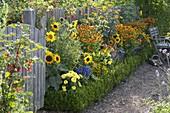 Buntes Sommerbeet mit Sommerblumen und Stauden