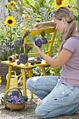 Frau bindet Lavendel - Straeusse zum trocknen