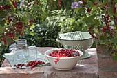 Frisch gepflueckte rote Johannisbeeren (Ribes rubrum) in Schale