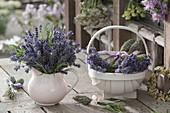 Kleiner Strauss aus frischem Lavendel (Lavandula) in Sahnekännchen