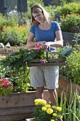 Frau mit frisch geernteten Gemüsen zwischen Hochbeeten