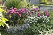 Monarda didyma 'Pink Lace' (Indianernessel), Achillea ptarmica 'Gypsy White'
