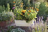 Gelber Holzkasten mit Calendula (Ringelblumen), Tagetes (Studentenblume)