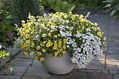 Weiß-gelb bepflanzter Kübel : Calibrachoa Superbells 'Lemon Slice'