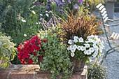 Korb mit Petunia Perfectunia 'White' Surfinia 'Deep Red' (Petunien)