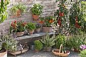 Paprika, Peperoni, Chili (Capsicum annuum) auf Holzbank , Petroselinum