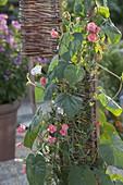 Selbstgemachte Dekoobjekte aus Weidengeflecht mit Kletterpflanzen