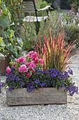 Holzkasten mit Rosa 'Heidetraum' (Bodendeckerrose), sehr robust