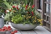 Graue Schale mit Paprika und Chili (Capsicum annuum), Gold-Oregano'