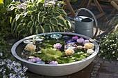 Schale mit schwimmenden Rosenblueten und Kerzen