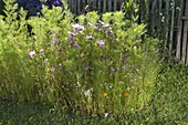 Rundes Beet mit Veitshöchheimer Sommerblumenmischung anlegen