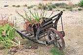Alte Gartenkarre aus Holz mit bepflanzter Kiste
