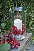 Windlicht mit weisser Kerze und roten Beeren von Sorbus (Eberesche
