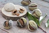 Frisch geerntete suesse Mandeln (Prunus dulcis) öffnen