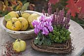 Herz aus Muehlenbeckia (Drahtwein) bepflanzt mit Cyclamen (Alpenveilchen)