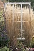 Altes Fenster als Dekoobjekt im Beet, Calamagrostis (Reitgras)
