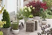 Terrasse mit Gehoelzen und Gräsern