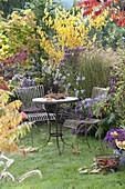 Kleiner Sitzplatz auf Rasen am Herbstbeet mit Astern und Gehoelzen