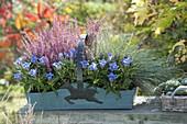 Holzkorb herbstlich bepflanzt : Gentiana scabra