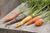 Tableau mit Karotten - Möhren - Sorten
